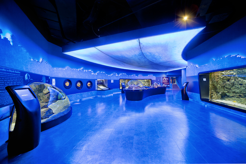 Aqua Florya Akvaryum ile ilgili görsel sonucu